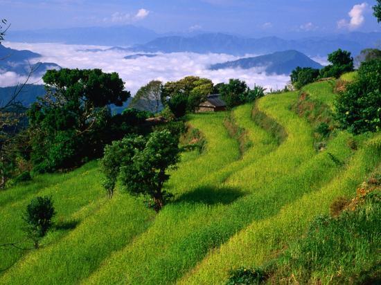 carol-polich-annapurna-south-in-the-annapurna-sanctuary-gandaki-nepal
