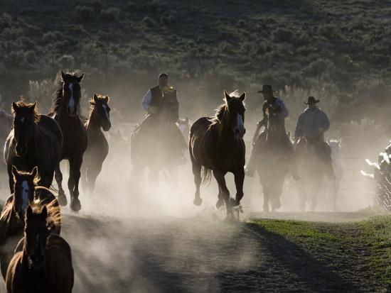 carol-walker-cowboys-driving-horses-at-sombrero-ranch-craig-colorado-usa