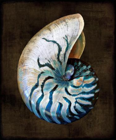 caroline-kelly-ocean-treasure-iv