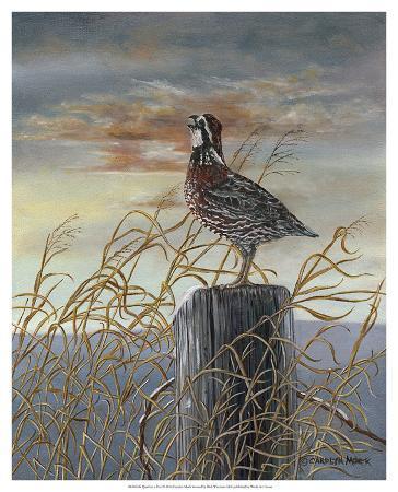 carolyn-mock-quail-on-a-post