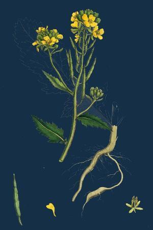 carpinus-betulus-hornbeam