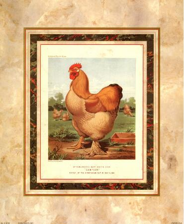 cassell-s-poultry-book-buff-cochin-cock