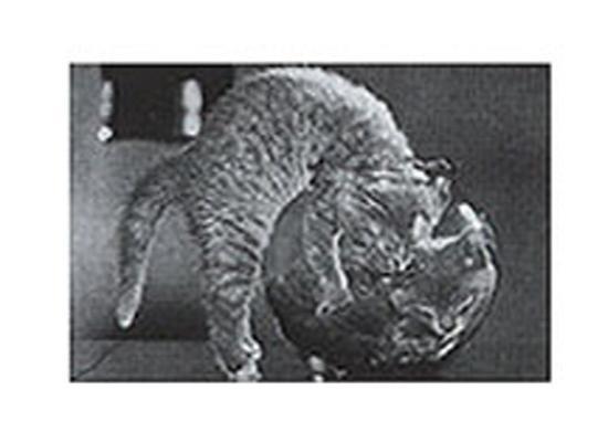 cat-fish-bowl-twins