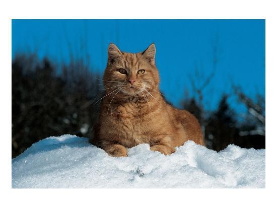 cat-in-the-snow