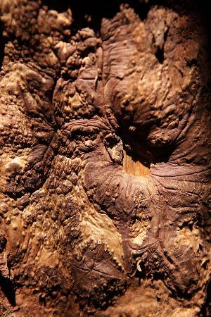 catharina-lux-cinnamon-tree-cinnamomum-sp-bark-cinnamon-bark