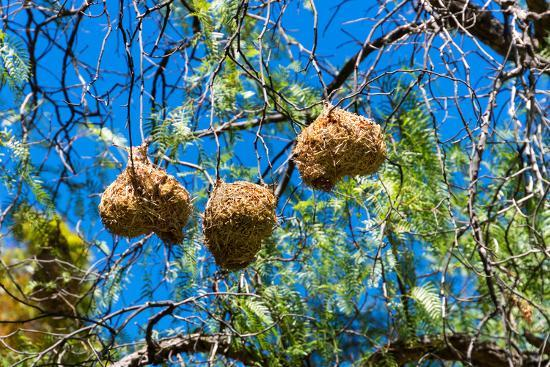 catharina-lux-south-africa-nests-of-weavers