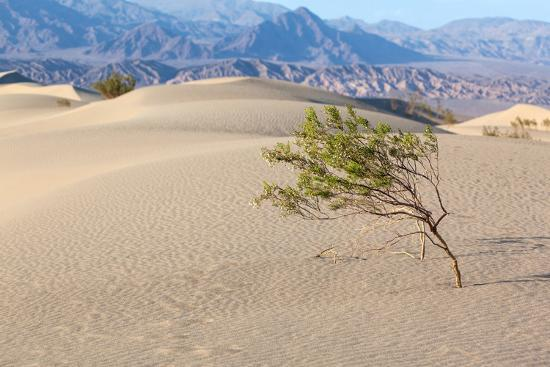 catharina-lux-usa-death-valley-national-park-mesquite-flat-sand-dunes
