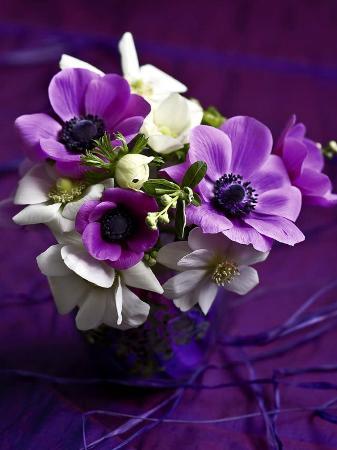 catherine-beyler-les-anemones