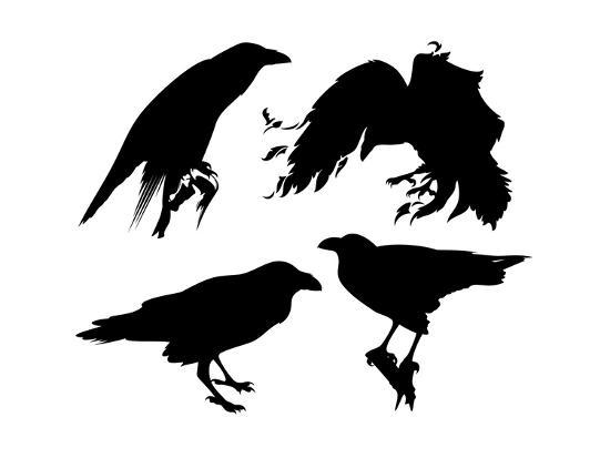 cattallina-raven-set