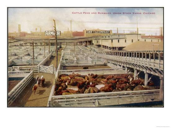 cattle-awaiting-slaughter-in-the-union-stock-yards-chicago-note-the-boards-for-armour-and-swift