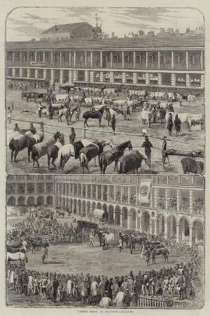 cattle-show-at-halifax
