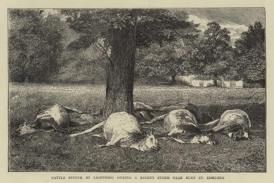 cattle-struck-by-lighting-during-a-recent-storm-near-bury-st-edmunds