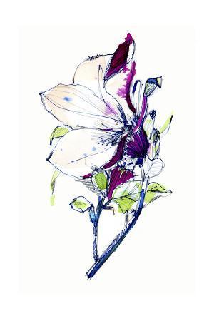 cayena-blanca-flower-sketch