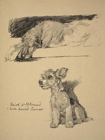 cecil-aldin-irish-wolfhound-and-wire-haired-terrier-1930-just-among-friends-aldin-cecil-charles-windsor