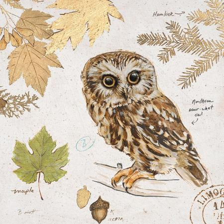 chad-barrett-northern-owl