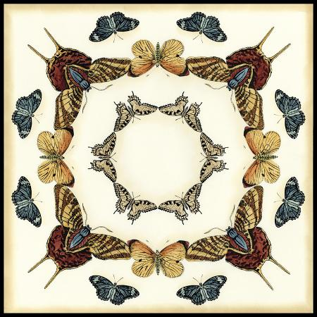 chariklia-zarris-butterfly-collector-i