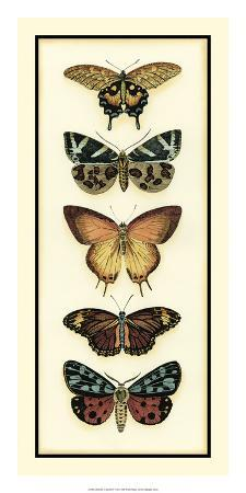 chariklia-zarris-butterfly-collector-v