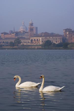 charles-bowman-mantua-swans