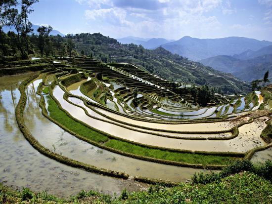 charles-crust-flooded-rice-terraces-panzhihua-village-yuanyang-county-yunnan-province-china