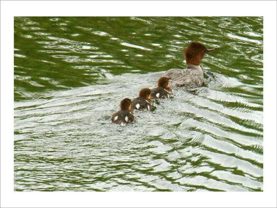 charles-glover-lessons-from-mother-duck