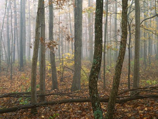 charles-gurche-autumn-ozark-st-francis-national-forest-arkansas-usa