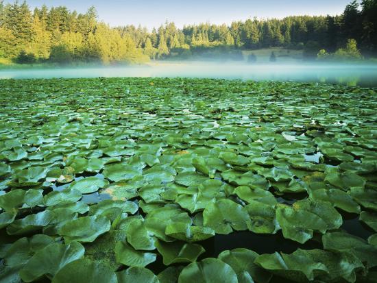 charles-gurche-fowler-s-pond-preserve-orcas-island-washington-usa