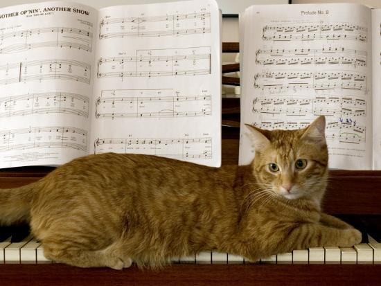 charles-kogod-family-cat-rests-on-a-piano-keyboard-beneath-sheet-music