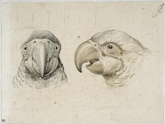 charles-le-brun-deux-t-s-de-perroquets