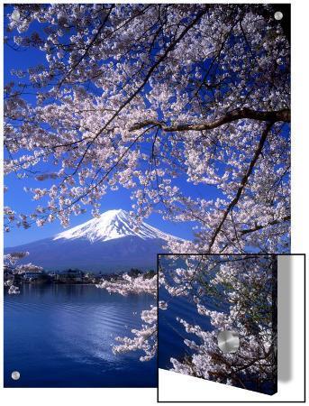 cherry-blossoms-and-mt-fuji