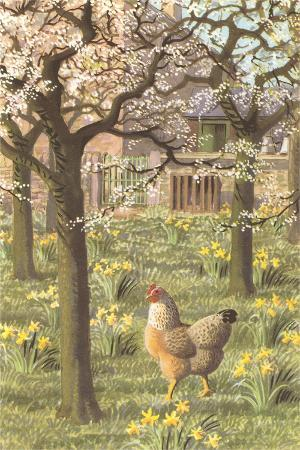 chickens-in-the-spring