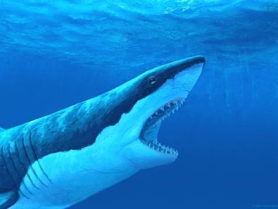 chris-butler-great-white-shark