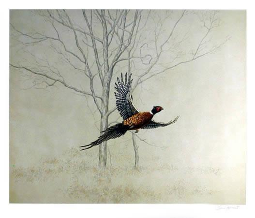 chris-forrest-pheasant
