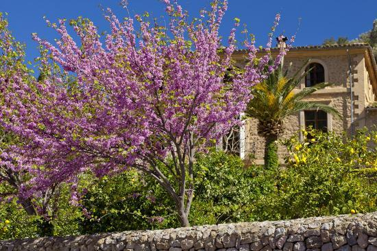 chris-seba-spanish-balearic-islands-island-majorca-village-dei-cherry-blossoms-lemon-tree