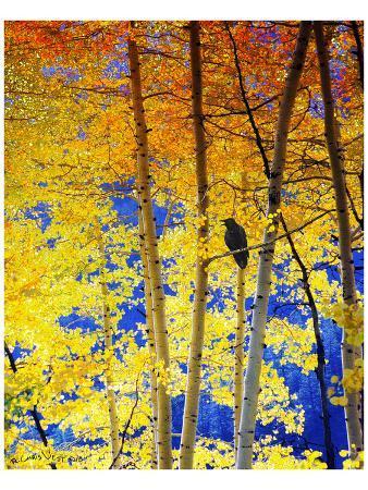 chris-vest-autumn-raven