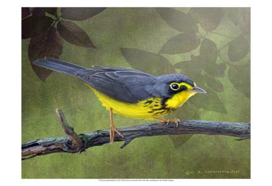 chris-vest-canada-warbler