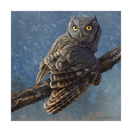 chris-vest-owl-in-winter-i