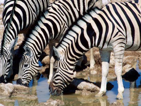 christer-fredriksson-zebras-at-waterhole-etosha-national-park-namibia