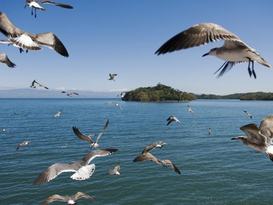 christian-aslund-birds-flying-along-ferry-ride-between-peninsula-de-nicoya-and-puntarenas
