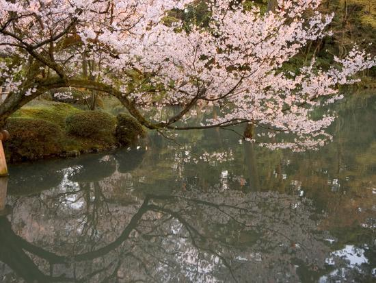 christian-kober-cherry-blossom-kenrokuen-garden-kanazawa-city-ishigawa-prefecture-honshu-island-japan