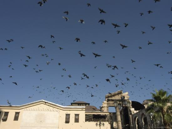 christian-kober-pigeons-in-umayyad-mosque-courtyard-damascus-syria-middle-east