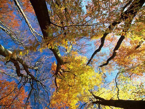 christian-ziegler-forest-canopy-in-autumn-jasmund-national-park-island-of-ruegen-germany
