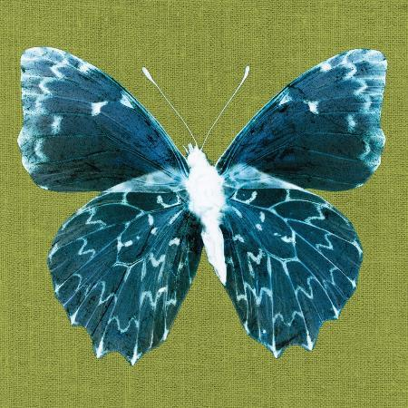 christine-caldwell-green-pop-butterfly