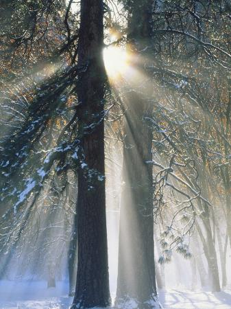 christopher-bettencourt-sun-rays-streaming-through-snow-covered-trees-yosemite-national-park-california-usa