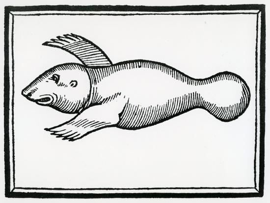 christopher-columbus-a-fish-called-manati-from-la-historia-general-de-las-indias-1547