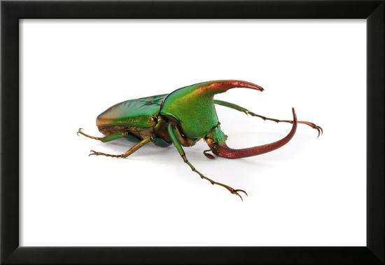 christopher-marley-borneo-flower-beetle