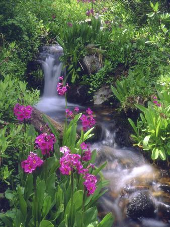 christopher-talbot-frank-wildflowers-along-flowing-stream-in-an-alpine-meadow-rocky-mountains-colorado-usa
