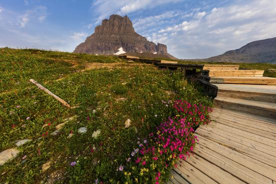 chuck-haney-alpine-wildflowers-along-boardwalk-glacier-national-park-montana