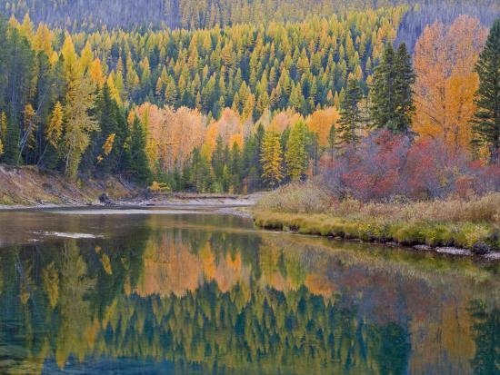 chuck-haney-autumn-colors-reflect-into-mcdonald-creek-glacier-national-park-montana-usa