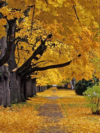 chuck-haney-autumn-maple-trees-missoula-montana-usa