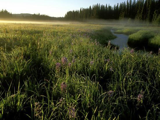 chuck-haney-early-morning-fog-on-packer-meadows-montana-usa